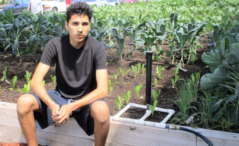 Community garden a source for fresh produce in Proviso