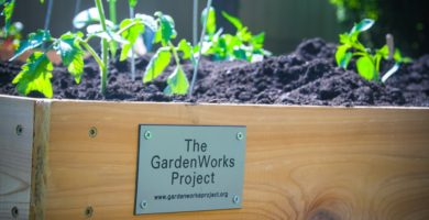 The Gardenworks Project partners with Hines VA Hospital to expand  fresh food options for veterans